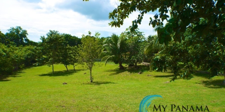 ForSale-TheCatDenTeam-MPRE-Cabuya-house-fruit-trees