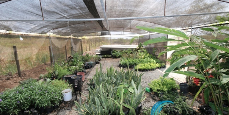 Home-For-Sale-Panama-Azura-Greenhouse-Plants