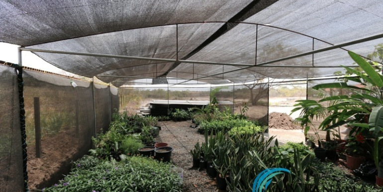 Home-For-Sale-Panama-Azura-Greenhouse2
