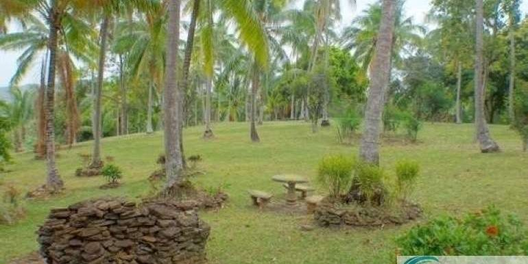 Panama-Buenos Aires-Finca-for-sale1