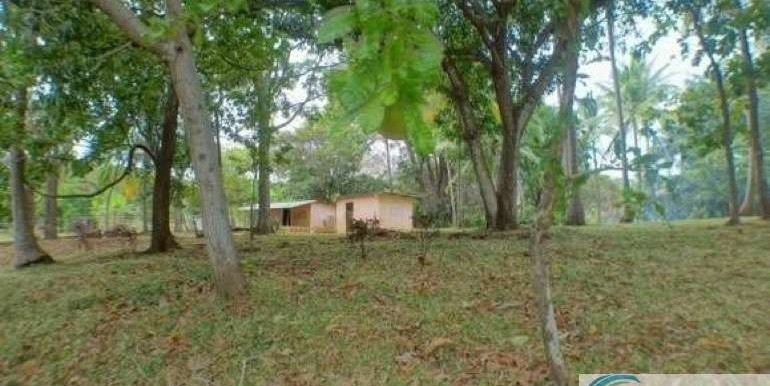 Panama-Buenos Aires-Finca-for-sale15
