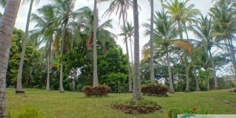 Panama-Buenos Aires-Finca-for-sale2