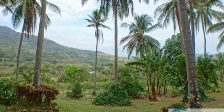 Panama-Buenos Aires-Finca-for-sale3